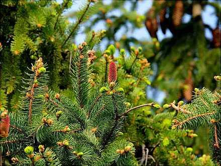 Geschichte Vom Weihnachtsbaum.Eintritt Frei Die Geschichte Von Weihnachtsbaum Und Tannengrün