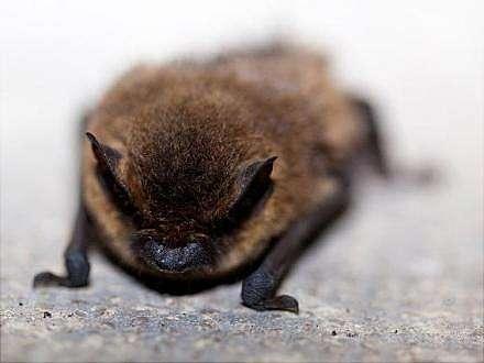 Eintritt Frei Ein Garten Für Fledermäuse Tag Der Offenen Tür